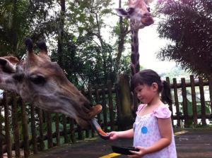 FeedGiraffe